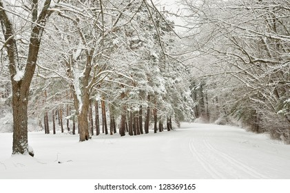White deciduous frosty snow covered tree alley around a snow covered road in winter