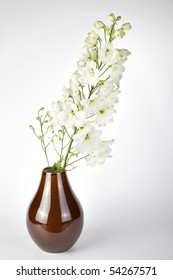 White Delphinium, a genus of about 300 species of perennial flowering plants in the buttercup family Ranunculaceae