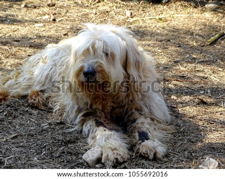 White Dirty Dog Felted Fur White Stock Photo Edit Now 1055692016