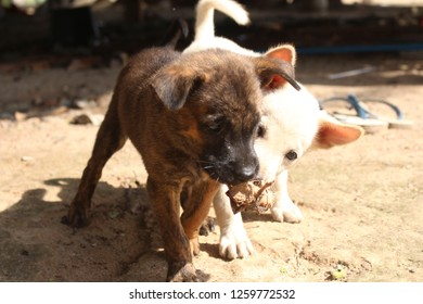 White dog and brown