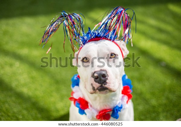 White dog celebrates Fourth of July summer holiday