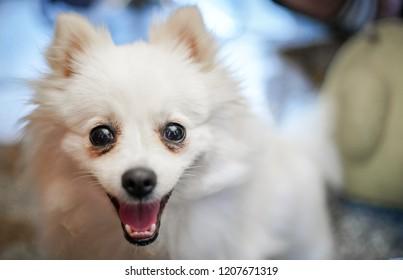 white dog with dramatic tone