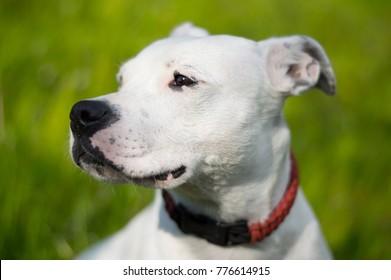 White dog model on a sunny day