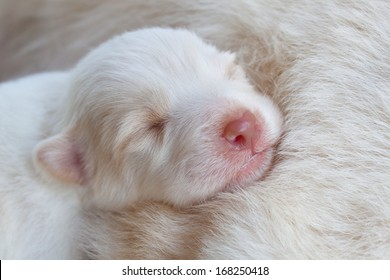 white dog newborn sleeping so cute