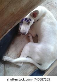 white dog on  a siemens floor