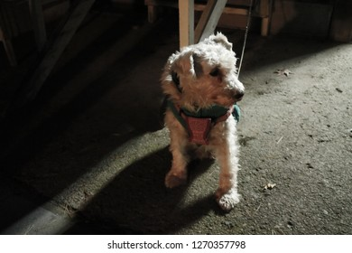 Dinky Dog Images Stock Photos Vectors Shutterstock
