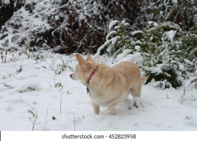 White dog in the snow