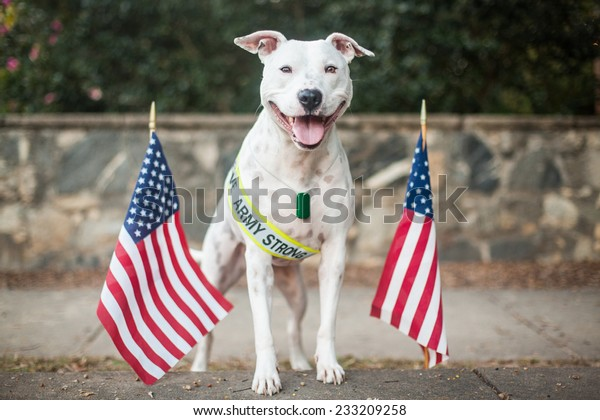 White dog supports the troops, military appreciation dog