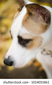 white dog terrier