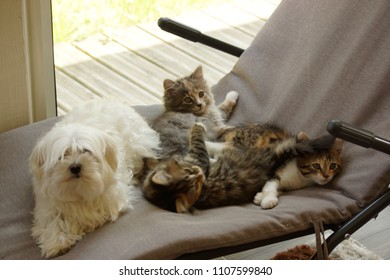A white dog and three small cats in the rest on a deckchair. Outdoor shooting, without character and of day.