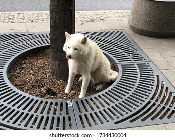 white dog. the dog is waiting for the owner. sad dog