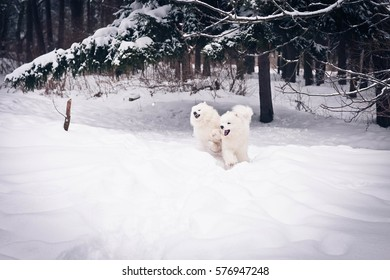 white dogs