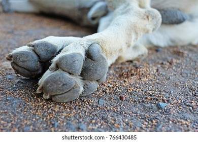 White dog's feet in the sand