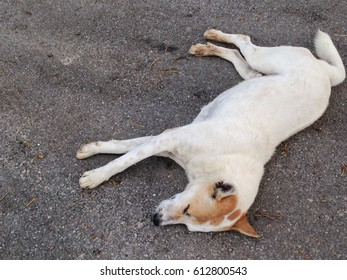 White dogs sleep on road