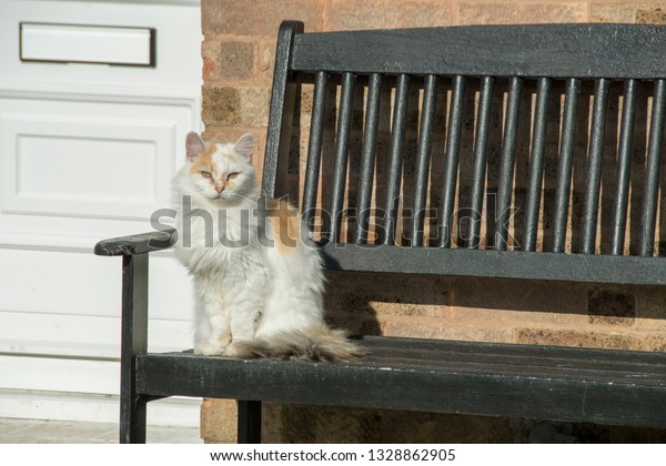 Cool White Domestic Cat Sits On Garden Stock Photo Edit Now Inzonedesignstudio Interior Chair Design Inzonedesignstudiocom