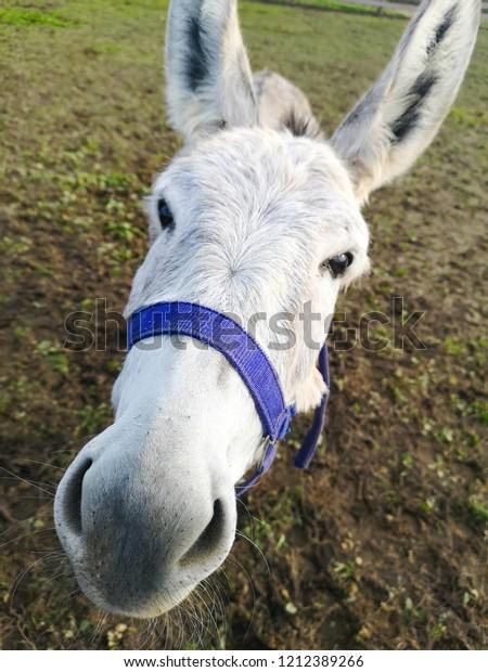 white donkey head