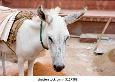 white donkey working on building
