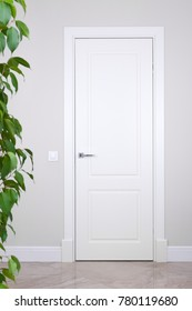 White door and switch on a light gray wall. The bright elements of the interior. Branches with leaves of a house plant