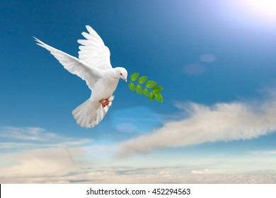 White Dove carrying leaf branch on blue sky background and international day of peace 2017