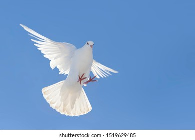white dove flapping wings flying against a blue sky