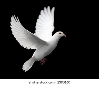 White Pigeon Images, Stock Photos & Vectors | Shutterstock