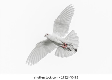 A white dove in flight against white clouds