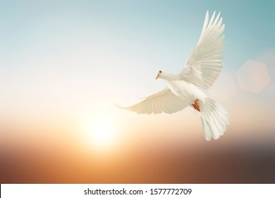 white Dove fly on pastel vintage background for Freedom concept and Clipping path