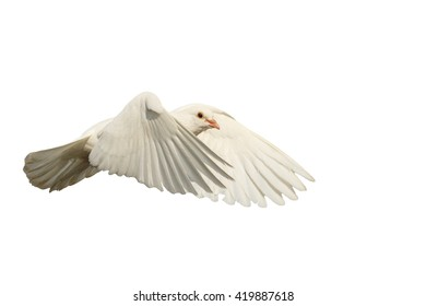 White dove fly with the wind isolated on white,mail white dove flying bird, a symbol of hope, a symbol of peace, biblical history
