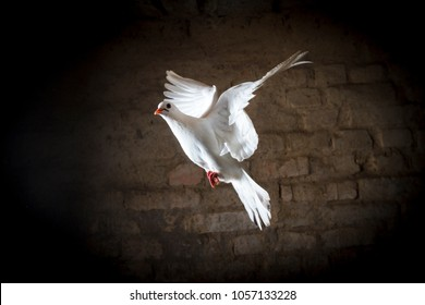 white dove flying in a dark room