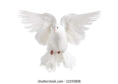 A white dove flying, isolated on white