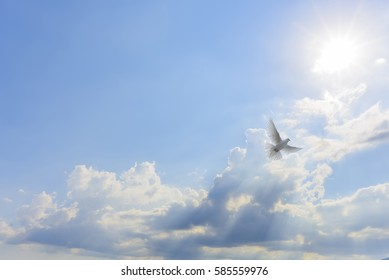 White dove flying to light
