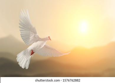 White Dove flying on Mountain vintage pastel background and beautiful light in international day of peace concept