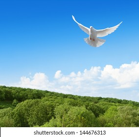 White dove flying in the sky above forest