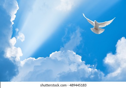 White dove flying in the sun rays among the clouds