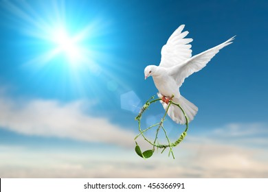 white dove holding green branch in pacification sign shape flying on blue sky for freedom concept in clipping path ,international day of peace 2017