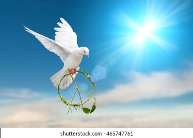white dove holding green branch in pacification sign shape flying on blue sky for freedom concept in clipping path,international day of peace 2019