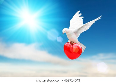 white dove holding red heart shape flying on blue sky and love bird freedom concept and international day of peace 2016
