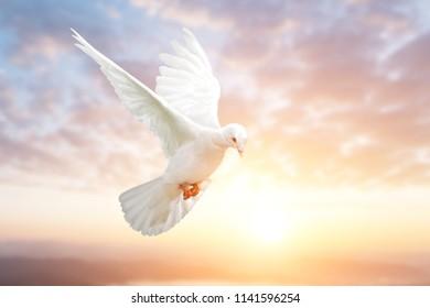 White Dove on Beautiful sky