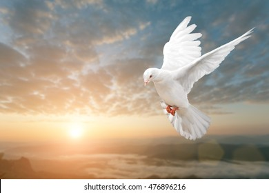 White Dove on Beautiful sunset view  and Freedom Peace Concept and international day of peace 2016