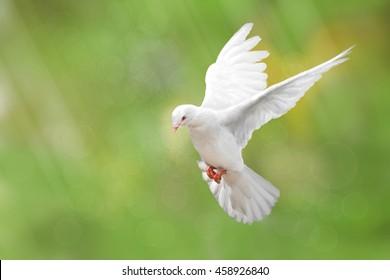 Белый Голубь на зеленом Боке и концепции свободы и Международный день мира 2017