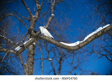 White dove in the park