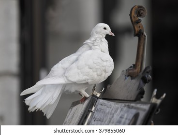 White dove sitting on a music stand