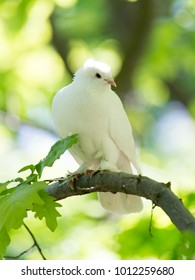 White doves on a tree in the summer