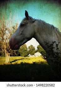 White draw horse in autumn