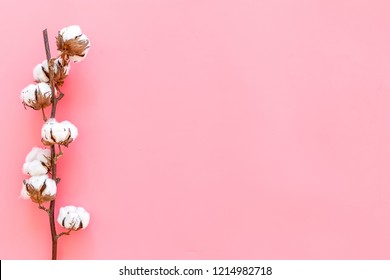 White dried flowers of cotton on pink background top view copy space