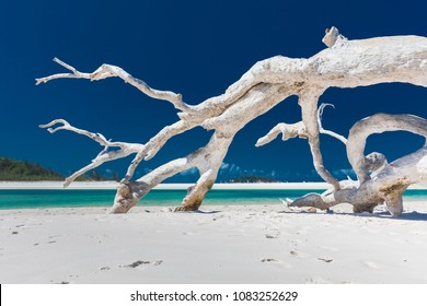 White driftwood tree on amazing Whitehaven Beach with white sand in the Whitsunday Islands, north Queensland, Australia