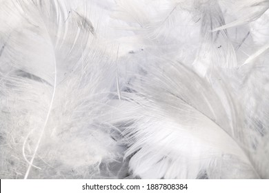 white duck feathers with visible details. textura or background - Shutterstock ID 1887808384