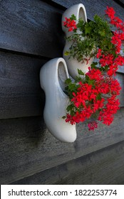 White Dutch shoes are used as pots for red flowers, they hang on a black wooden wall.