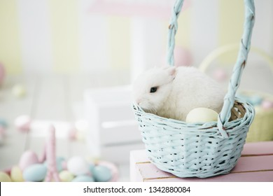 White easter bunny  in blue basket.Easter topic.
