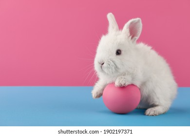 White Easter bunny rabbit with egg on blue and pink background